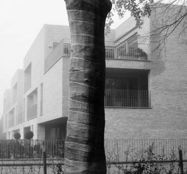 Trees-12x